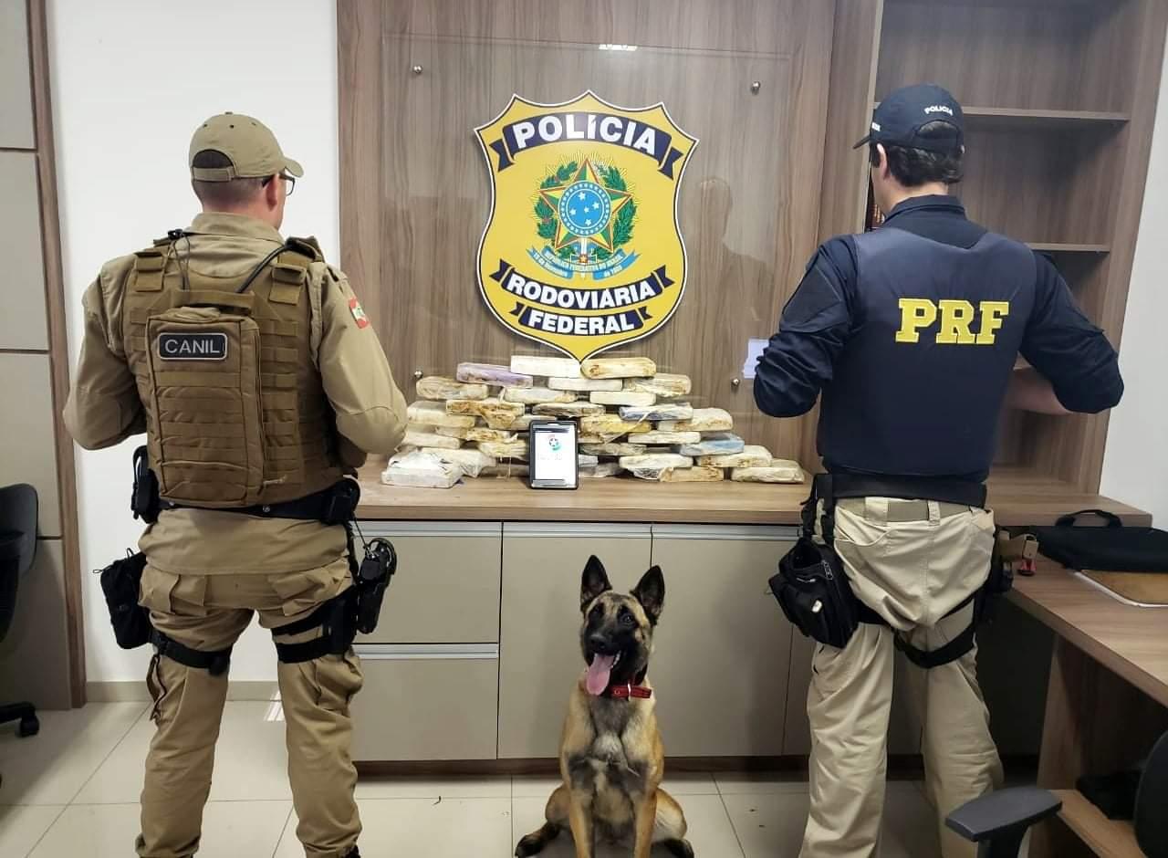 Carga milionária de drogas que viria para Criciúma é apreendida pela PRF