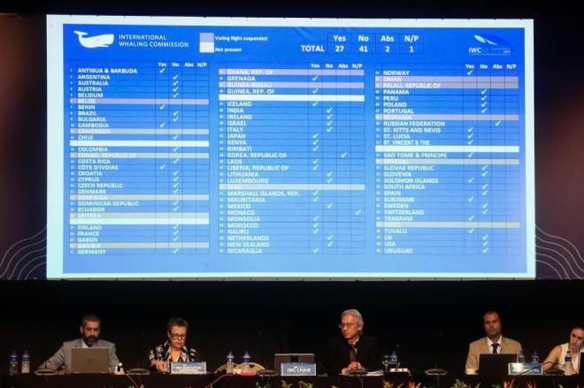 Liberação da caça comercial às baleias é rejeitada após votação em Florianópolis