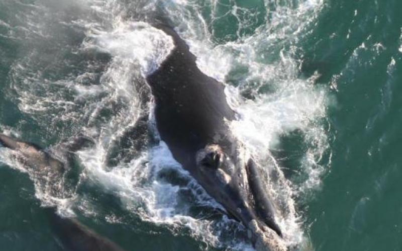 Florianópolis é palco de evento mundial que discute o fim da proibição da caça comercial de baleias