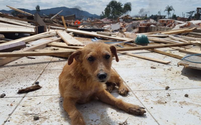 Cães são deixados para trás em desocupação em Navegantes