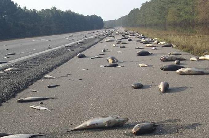 Após furacão Florence, milhares de peixes mortos aparecem em estrada