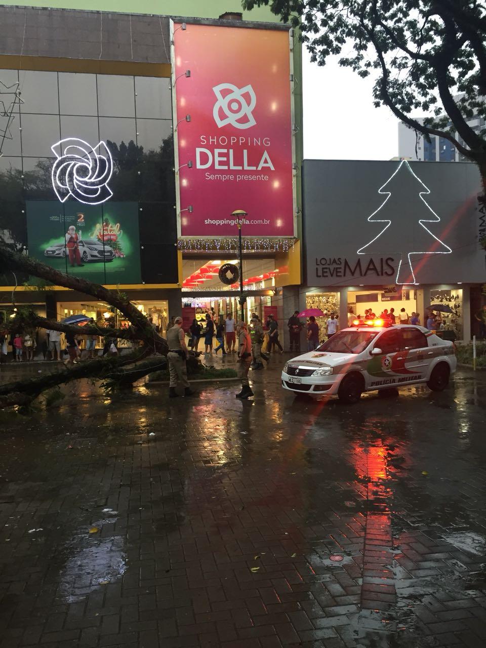 Chuva com ventos fortes derruba árvores