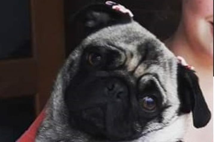 Bandidos furtam cachorro de criança autista em Criciúma
